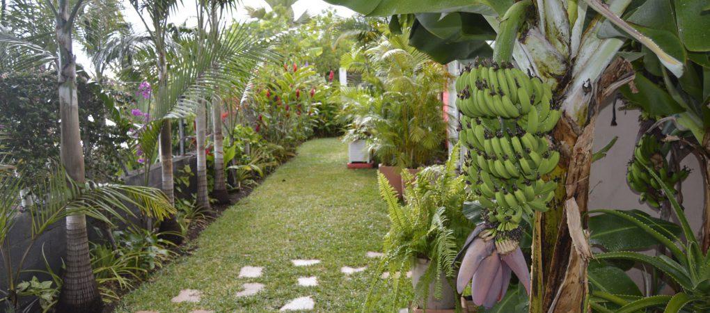 Vue générale du jardin tropical privatif