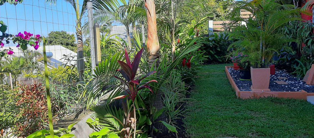 Le jardin tropical réservé au gîte